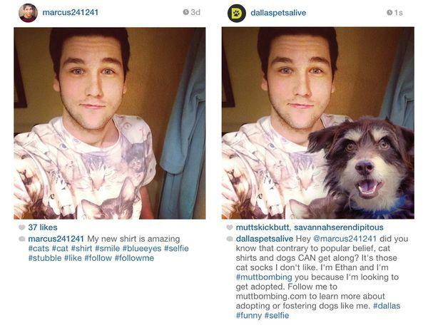 PuppyInjected Selfies Pets, Selfie, Cats