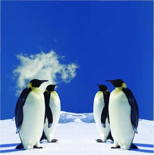 fotobehang Dutch Digiwalls pinguins 70014