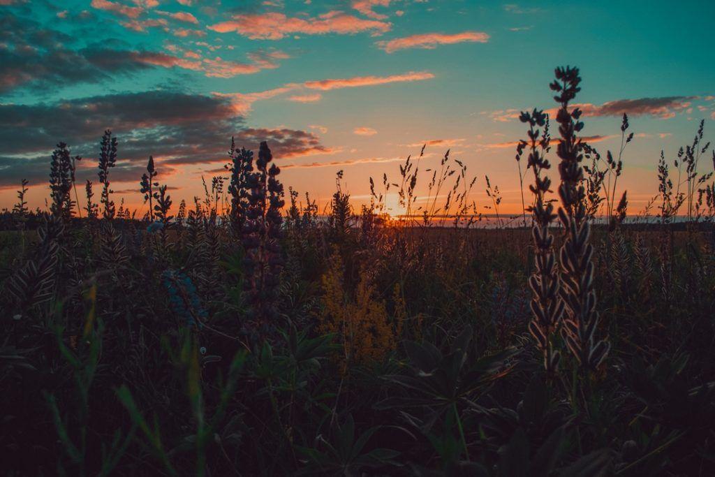 اجمل خلفيات لابتوب ماك Best Laptop Wallpapers 2019 Tecnologis Landscape Photography Nature Sunset Color Palette Landscape Wallpaper