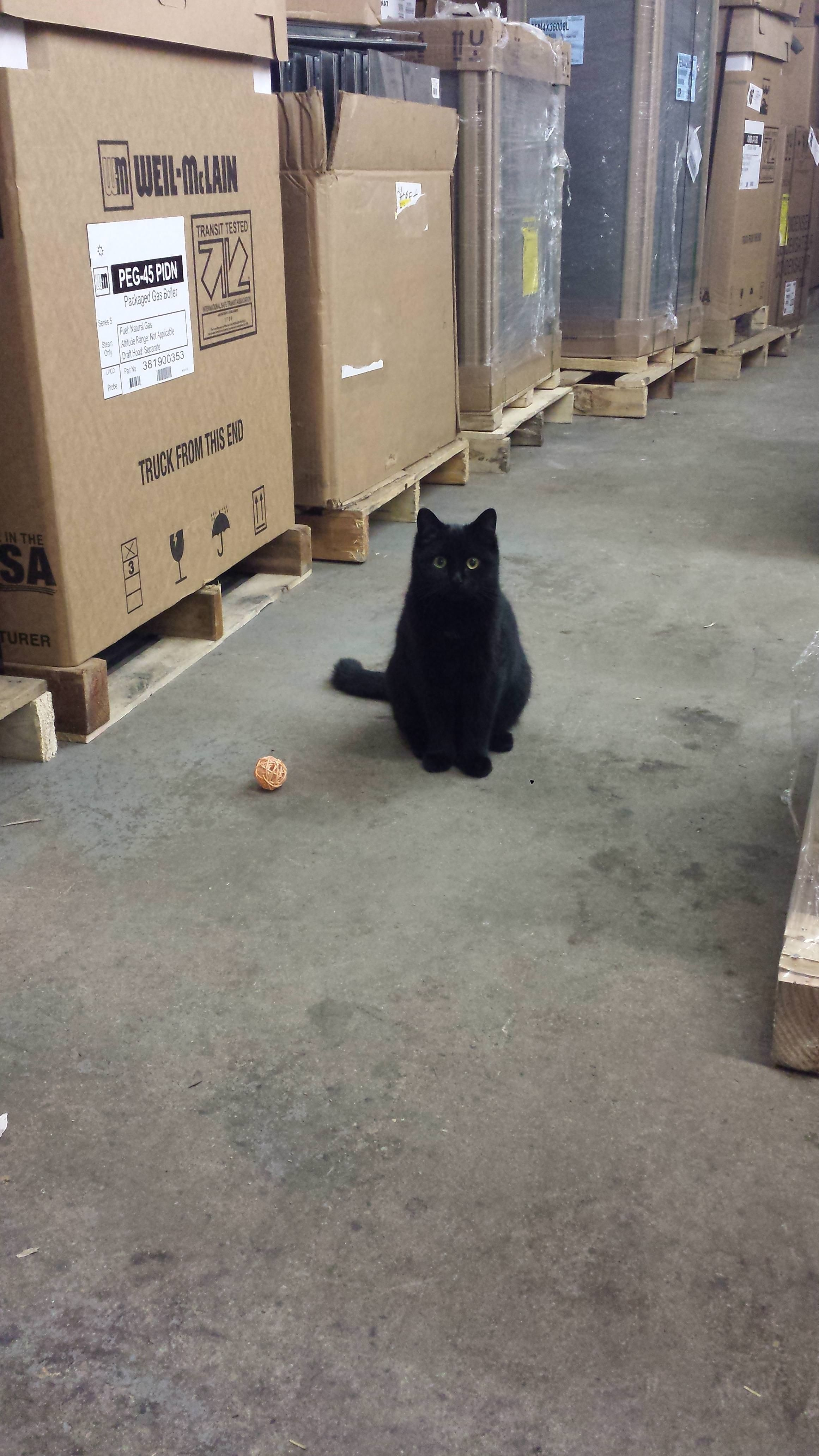 Our Well Mannered Shop Kitty Politely Asking For A Game Of Fetch Http Ift Tt 2d6zn4e Kittens Cutest Funny Cat Jokes Cat Feline