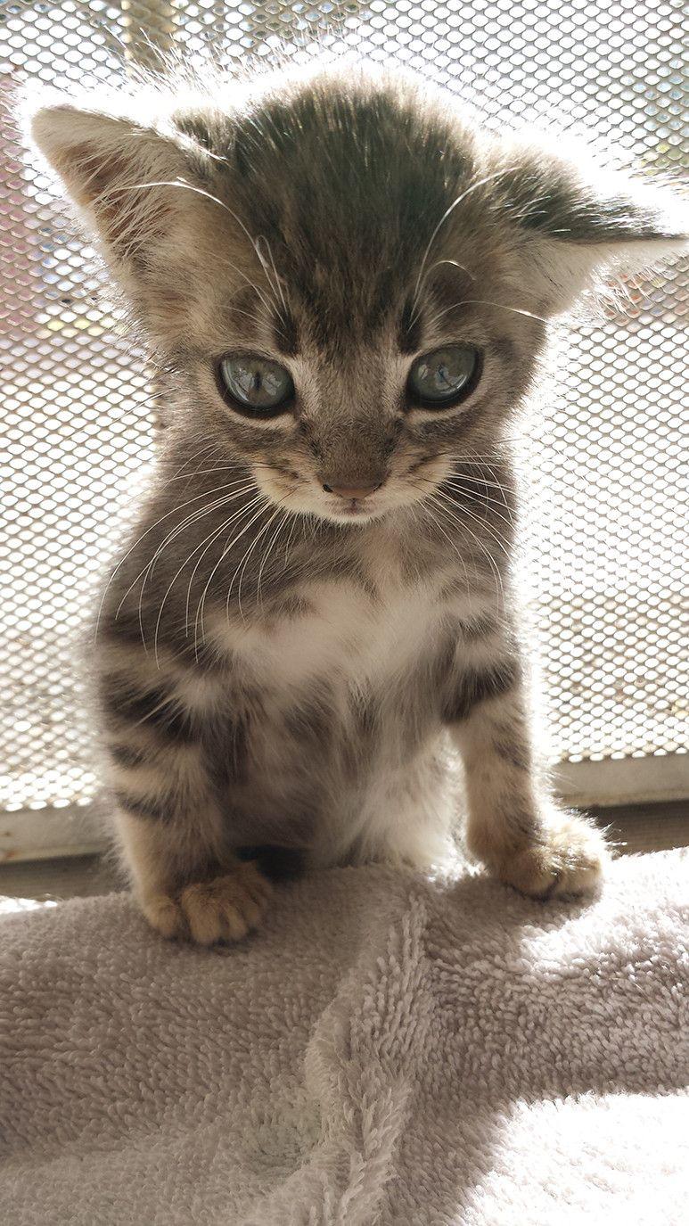 Pin On Katter