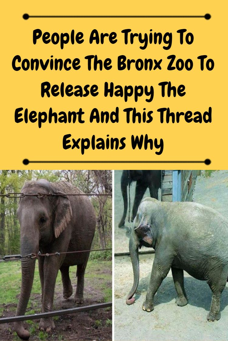 People Are Trying To Convince The Bronx Zoo To Release
