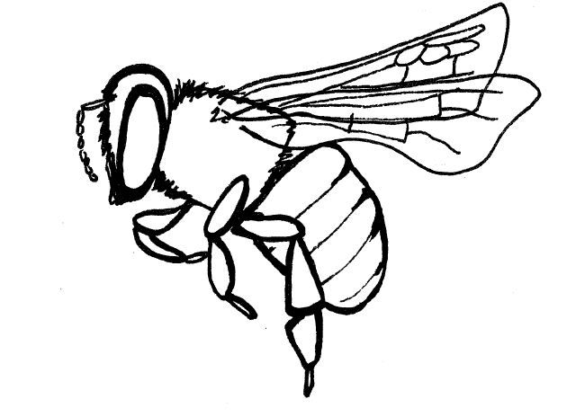 Line Drawing In C : Simple insect and flower line drawings bees