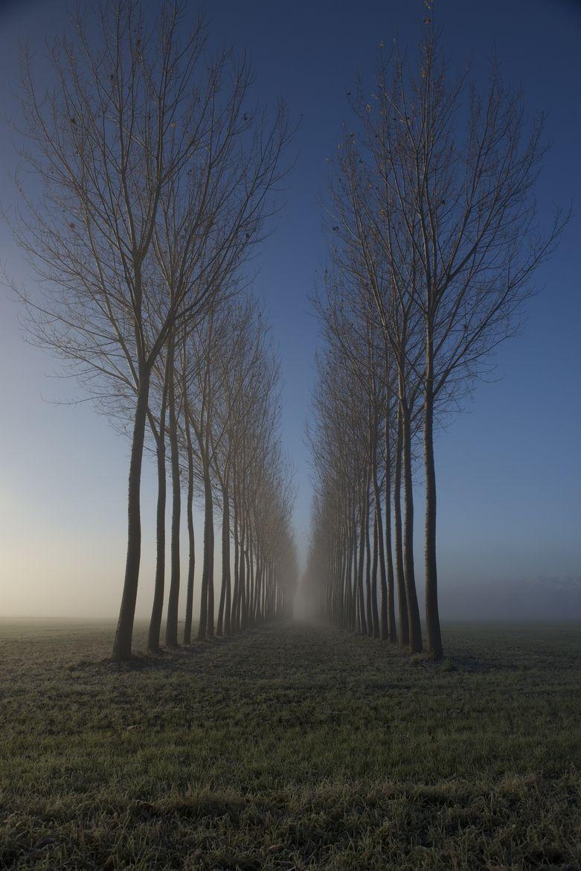 Trees/fog