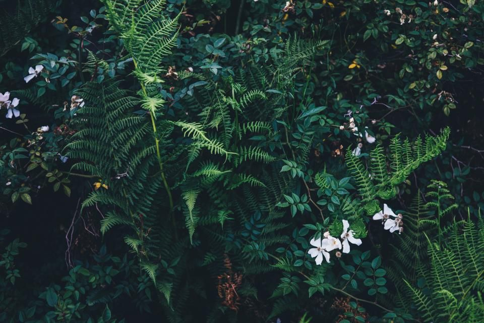 green, plants, leaves, garden, nature