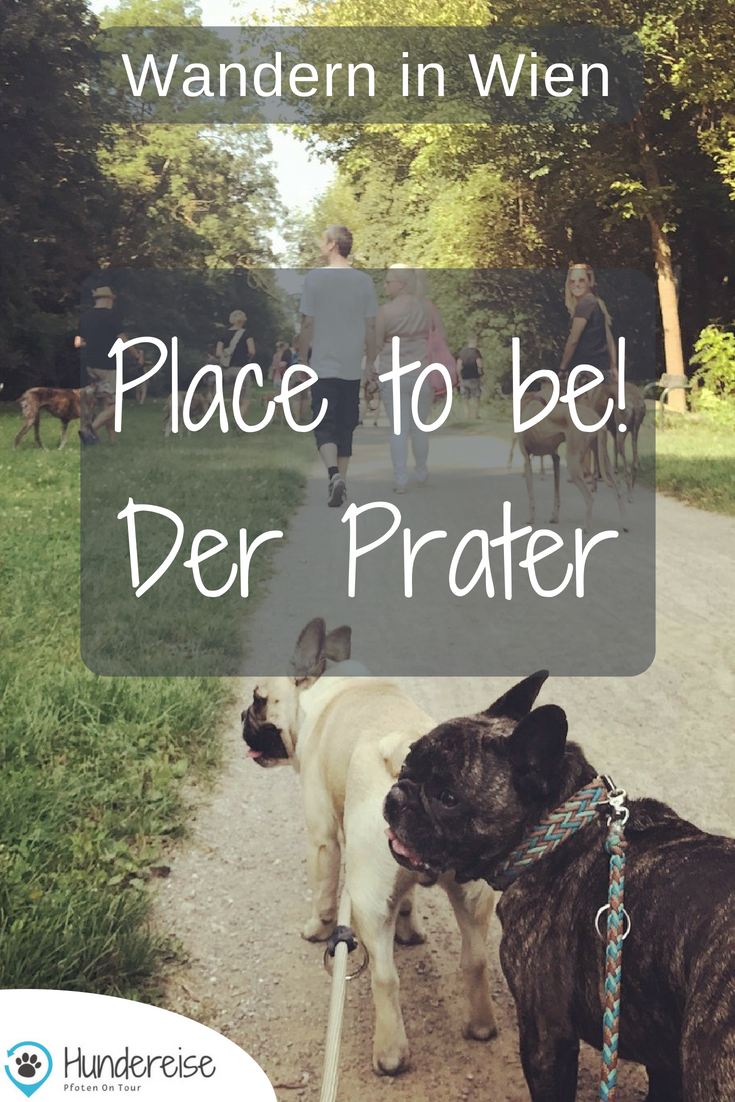 Spaziergang Mit Hund In Der Prater Hauptallee Hunde Hundestrand Hund Unterwegs