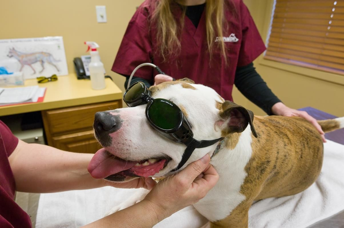 Training prepares pups for service PIT BULL Love Dogs