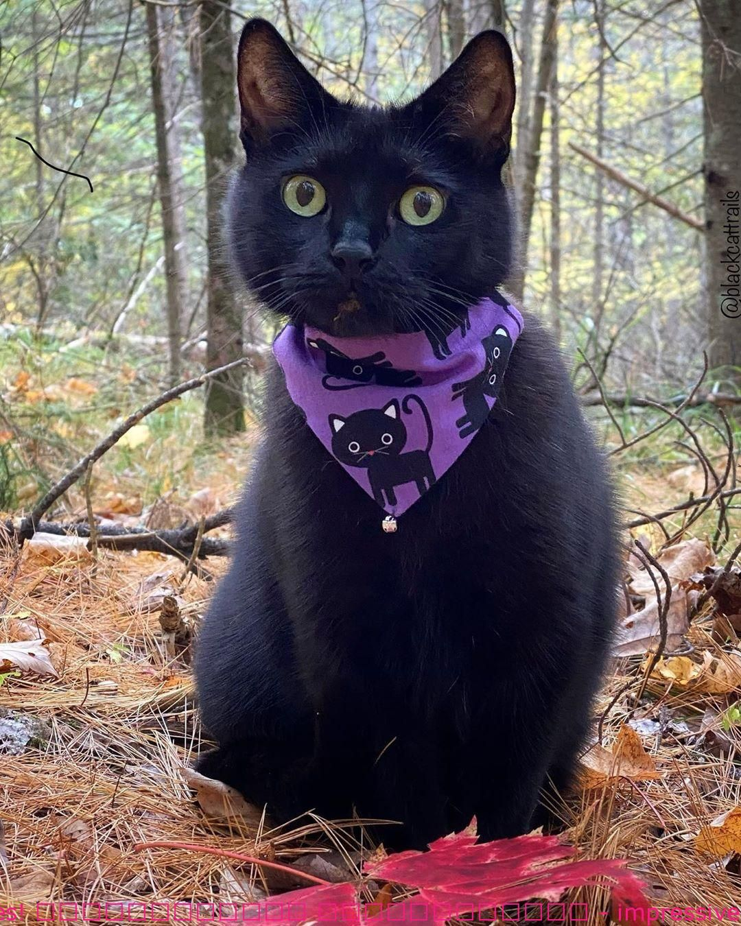 Satisfied Monday from Ledges! - impressive - FunnyCat -   19 diy Halloween Costumes cat ideas
