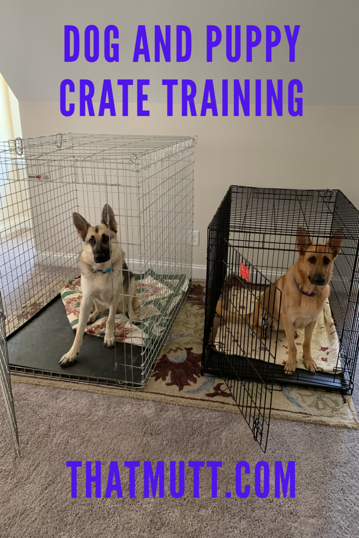 Dog And Puppy Crate Training Crate Training Puppy Crate Training Dog Puppy Crate