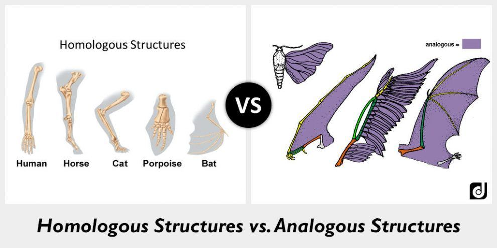 Image Result For Homologous And Analogous Structure Image