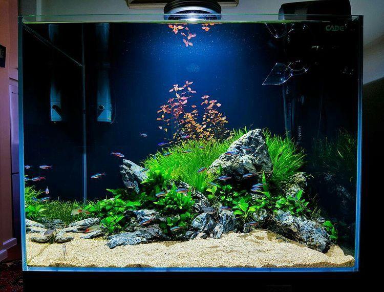 Inspiration tank your aquarium born here il for Piante per acquario online