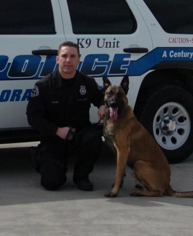 Officer Troy Bauer And K9 Rico Colorado Springs Police Department Shared By Kinetik K9 Police Dogs Military Dogs Military Working Dogs