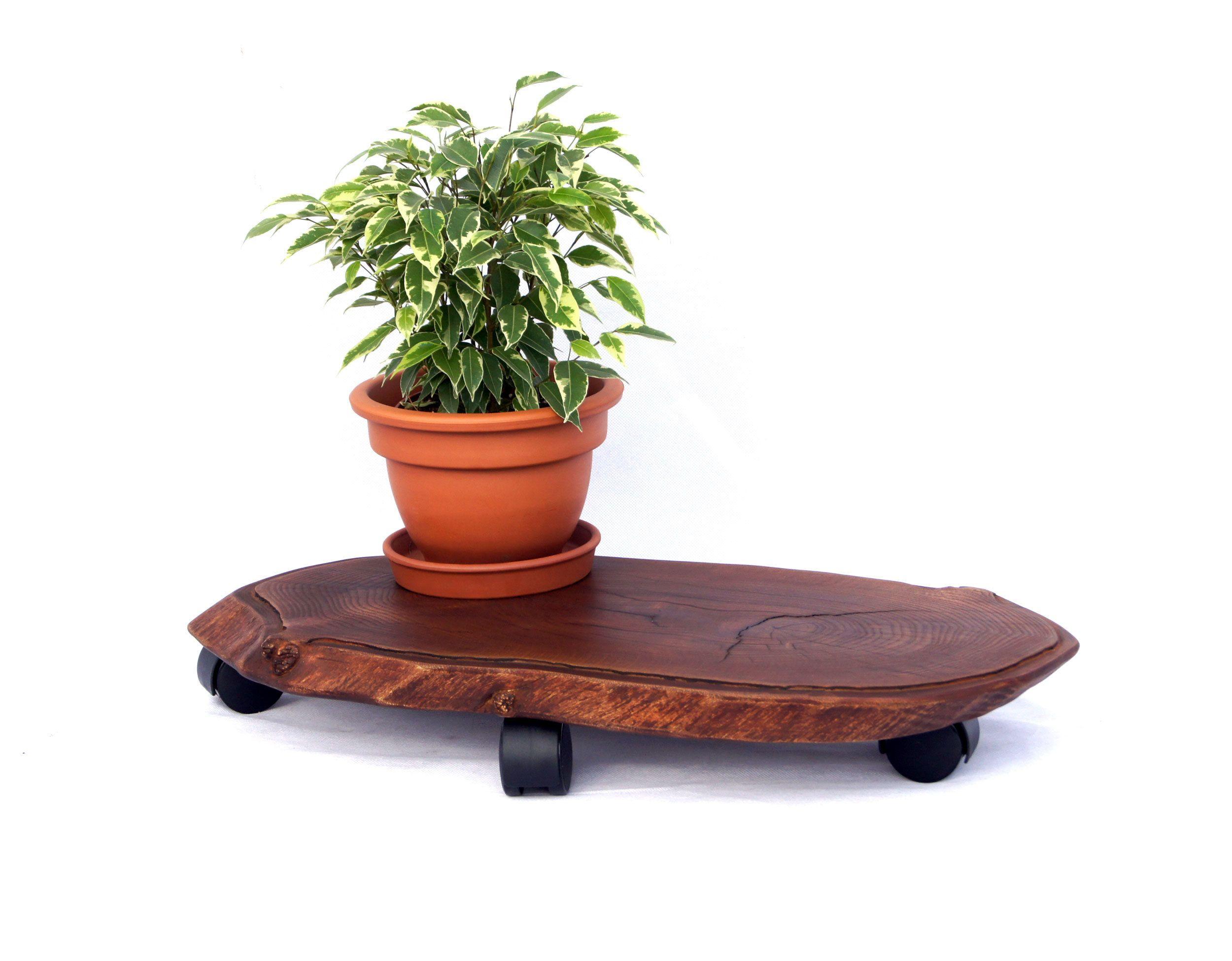 Plant Stand Indoor Live Edge Wood Slab