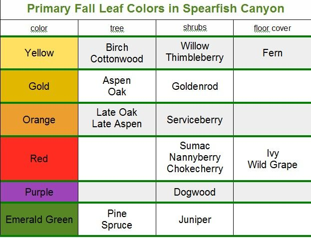 "While you can see fall colors throughout the Black Hills, the premier place to do some ""leaf peeping"" is Spearfish Canyon."