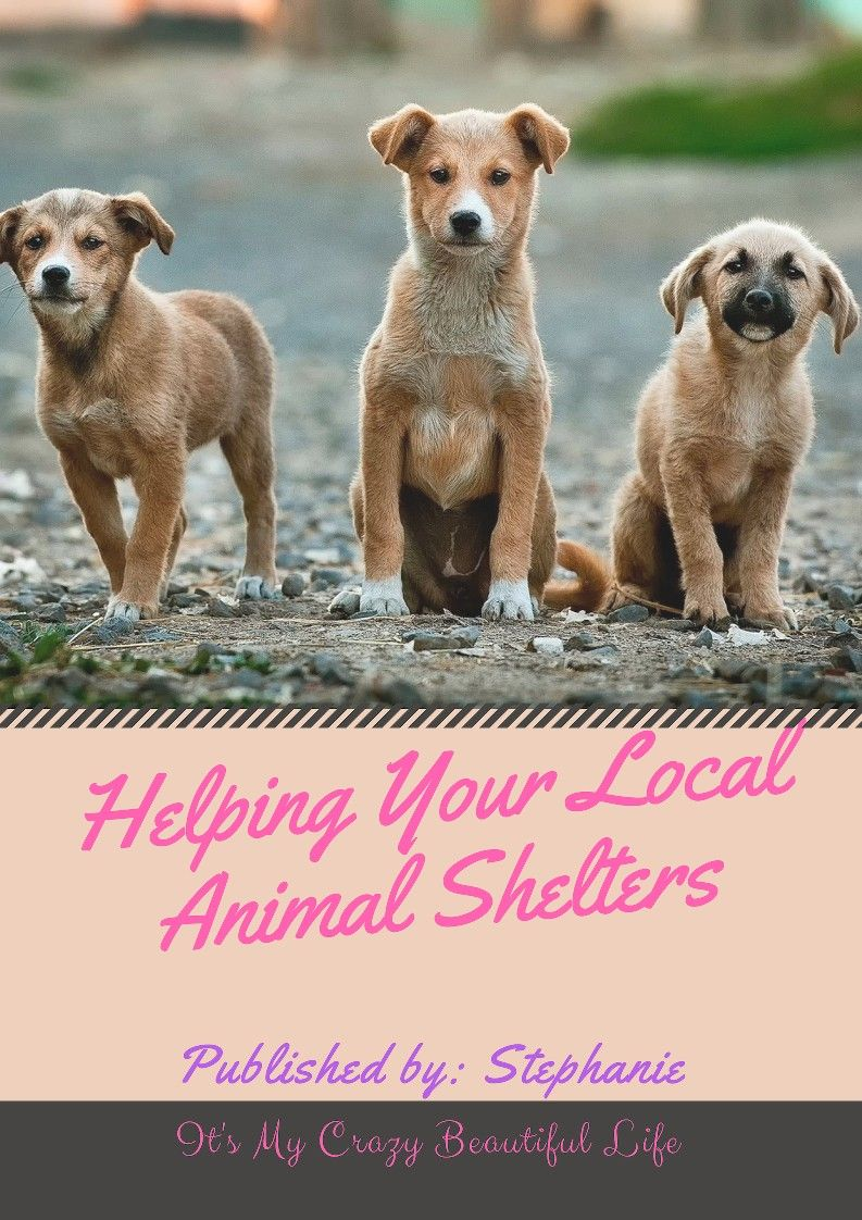 Helping Your Local Animal Shelters Dogs Animal Shelter Your Dog