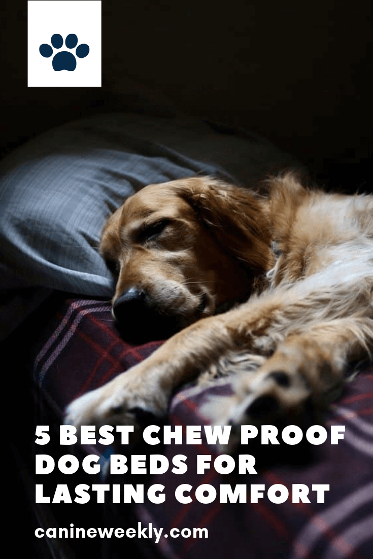 5 Best Chew Proof Dog Beds for 2020 (Reviews and Guide