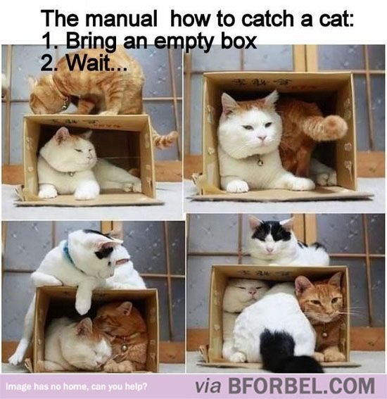 How to Catch a Cat - That last pic is hilarious!!