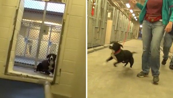 Shy Shelter Dog Flips Out After Realizing He S Been Adopted Shelter Dogs Dogs Animals