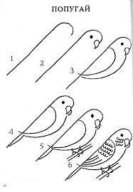 Parkiet Tekenen Vogels Tekenen Leer Tekenen Tekentutorials