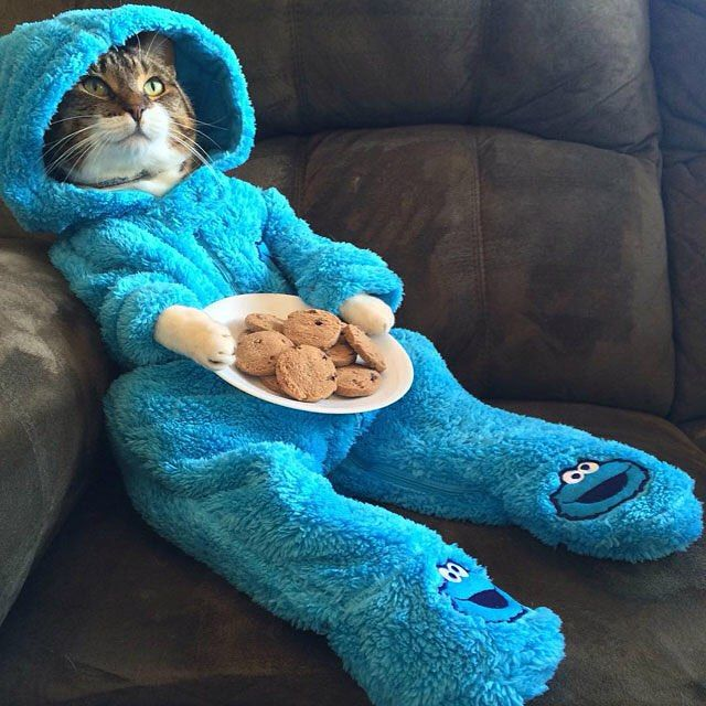 Poor cat dressed up as a cookie monster. Doesn't look very