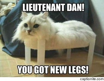 Not Funny Cat Meme : Cat pictures with captions new legs cat meme funny haha not