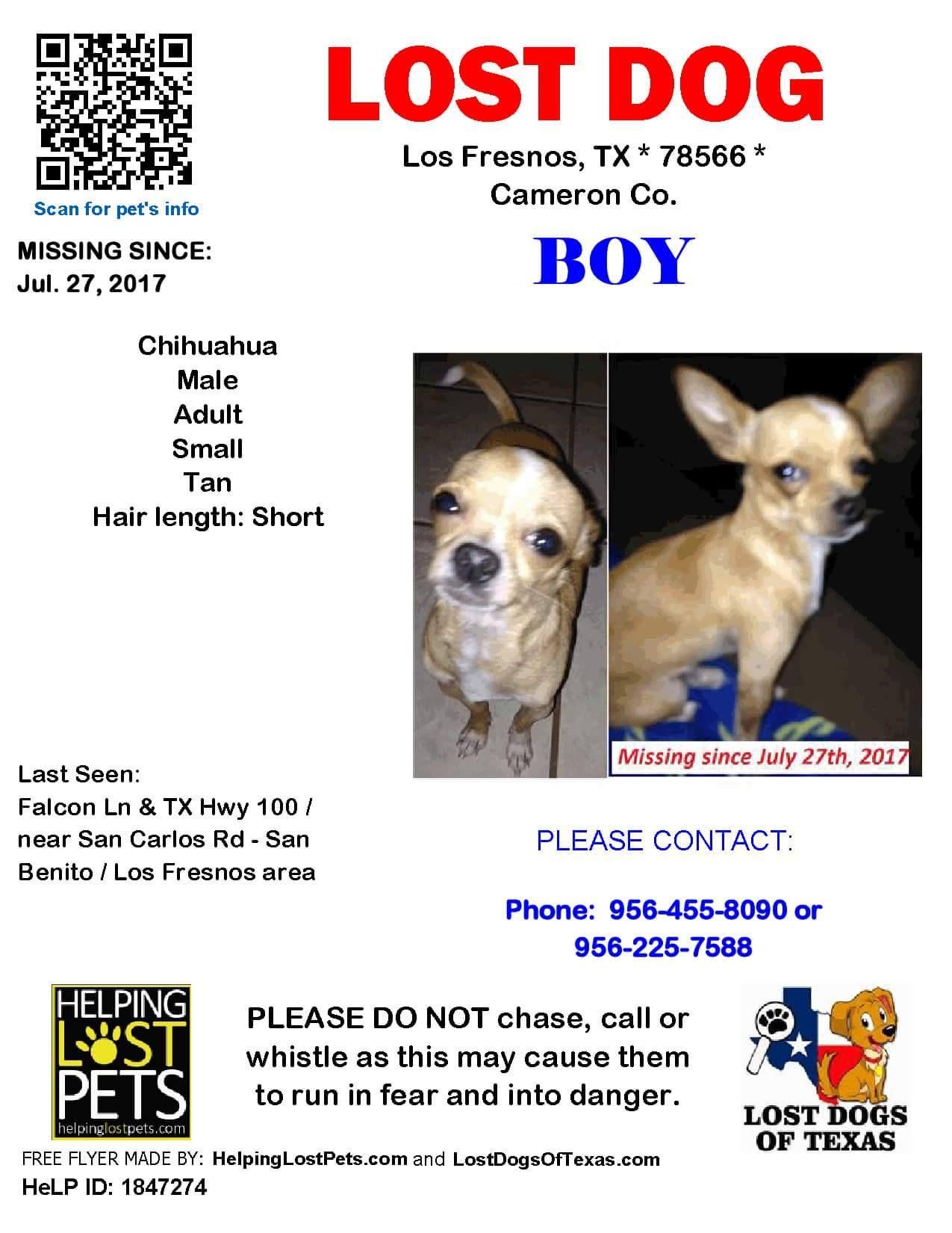 Lost Harvey Animal Chihuahua Losing A Dog Los Fresnos Chihuahua