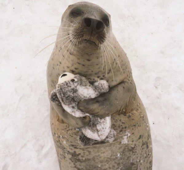seal cuddles plush seal
