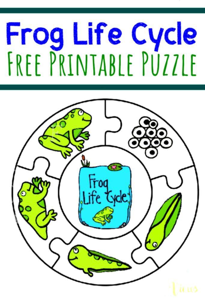 A1 A2 A3 A4 A5 Vintage Art Print Poster Frog Life Cycle Grey
