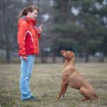 What Are The Easiest Dogs To Train Dog Training Training Your