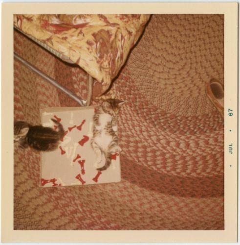 kittens rolling braided rug cot sleeping bag shoe chess box vtg 60s