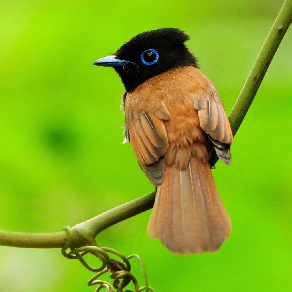 small tropical birds | tropical bird free ipad hd wallpaper