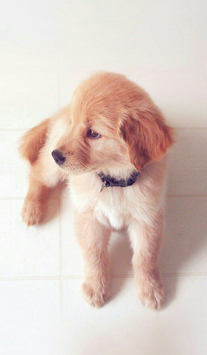 Pin By Maylin On Animales Cute Dog Wallpaper Puppy Wallpaper Puppy Wallpaper Iphone