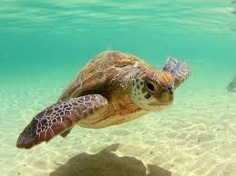 Výsledek obrázku pro roztomilé želvy