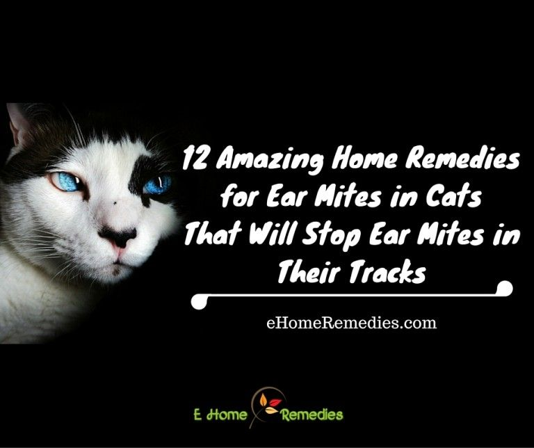 how to treat ear mites in cats with mineral oil