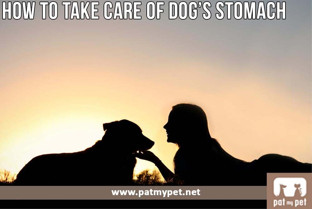 How To Take Care Of Your Dog's Stomach | Pat My Pet