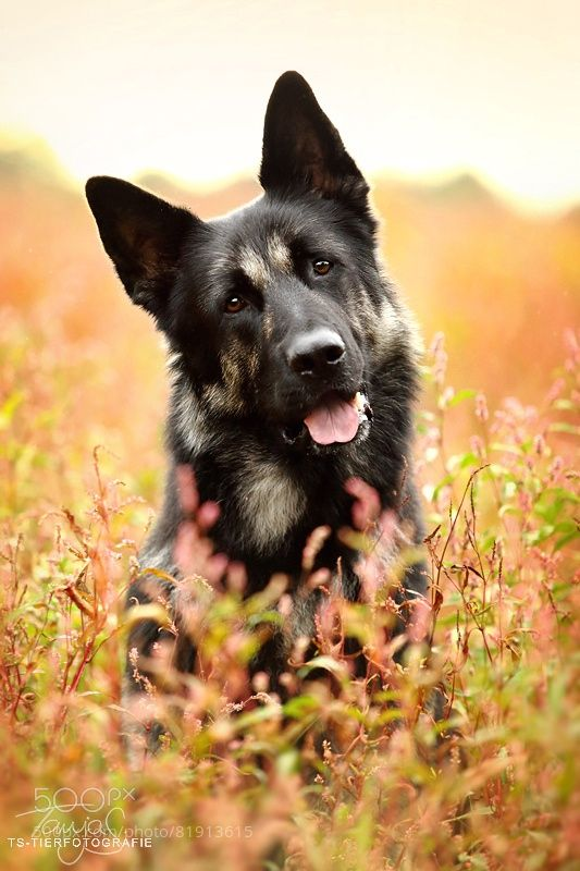 Freightliner Cascadia SPN Code DEF | German Shepherd Training | Dogs