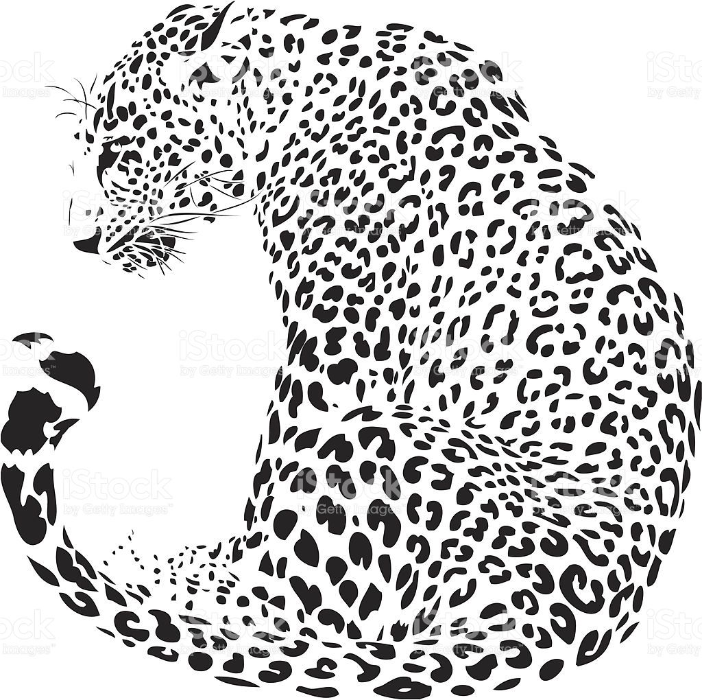 Leopard Illustration In Black Lines High Detailed In