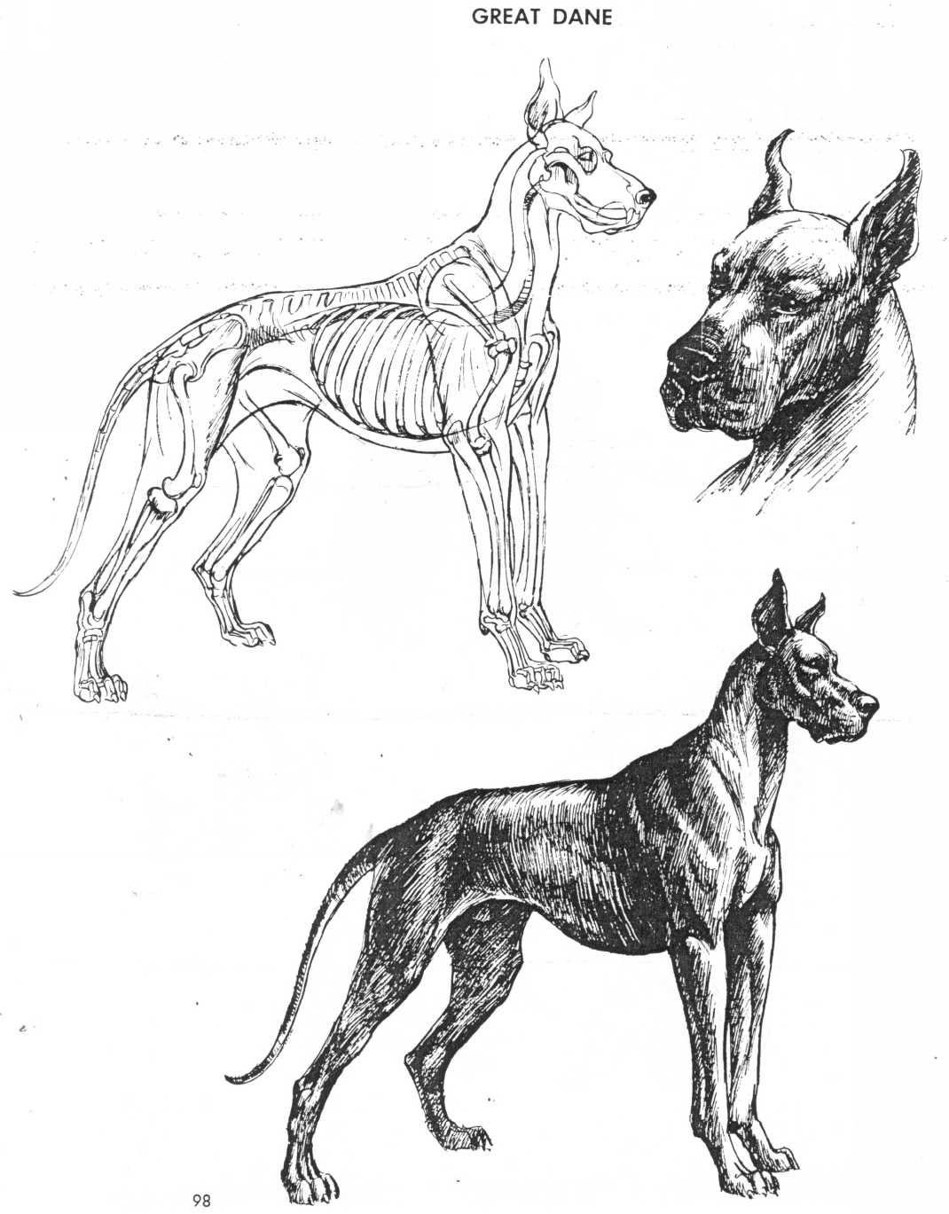 The Art of Animal Drawing by Ken Hultgren | AnatoRef - Anatomy ...