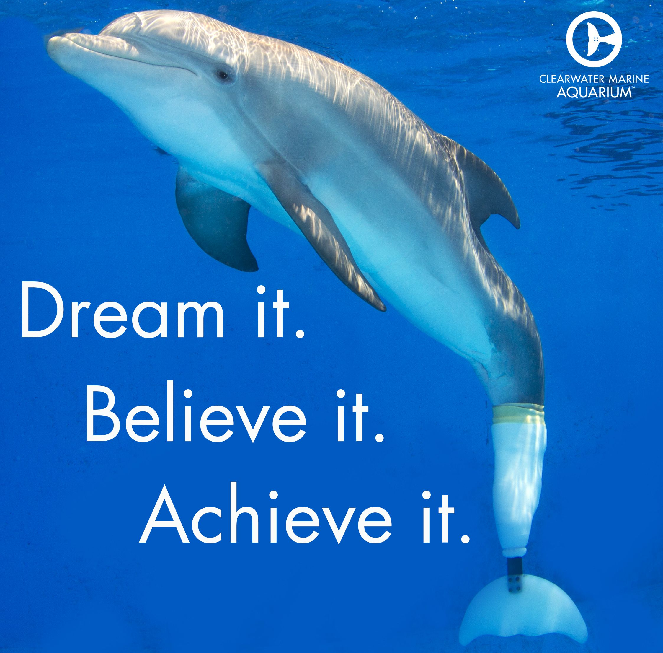 Motivationalmonday  Dolphines    Animal Dolphin Tale