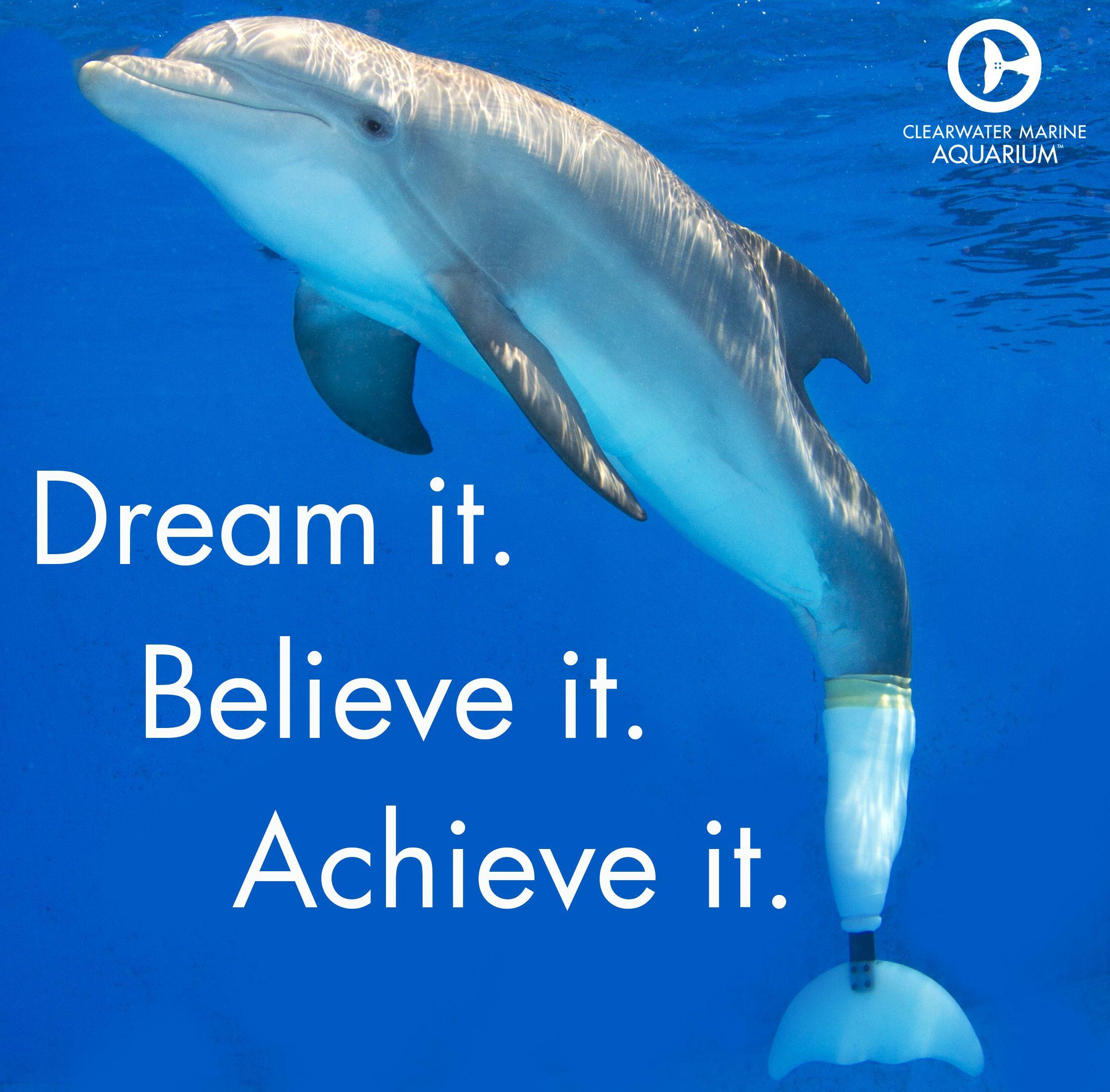 motivationalmonday winter the dolphin pinterest animal