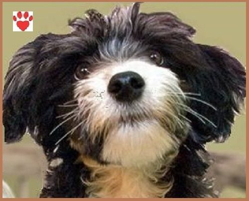 Today's blog post is very special. This isn't just because I am posting on a Sunday. It is also because a very special guest is here today. Meet Oreo. This cute little dog is the mascot of the Read...