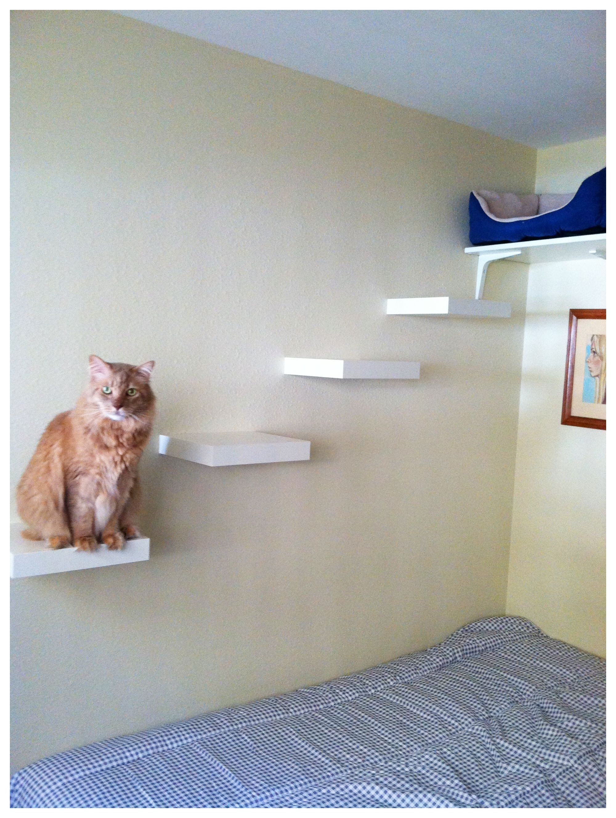 Cat Shelves - About a $50 project including the bed at the top. 4 ...