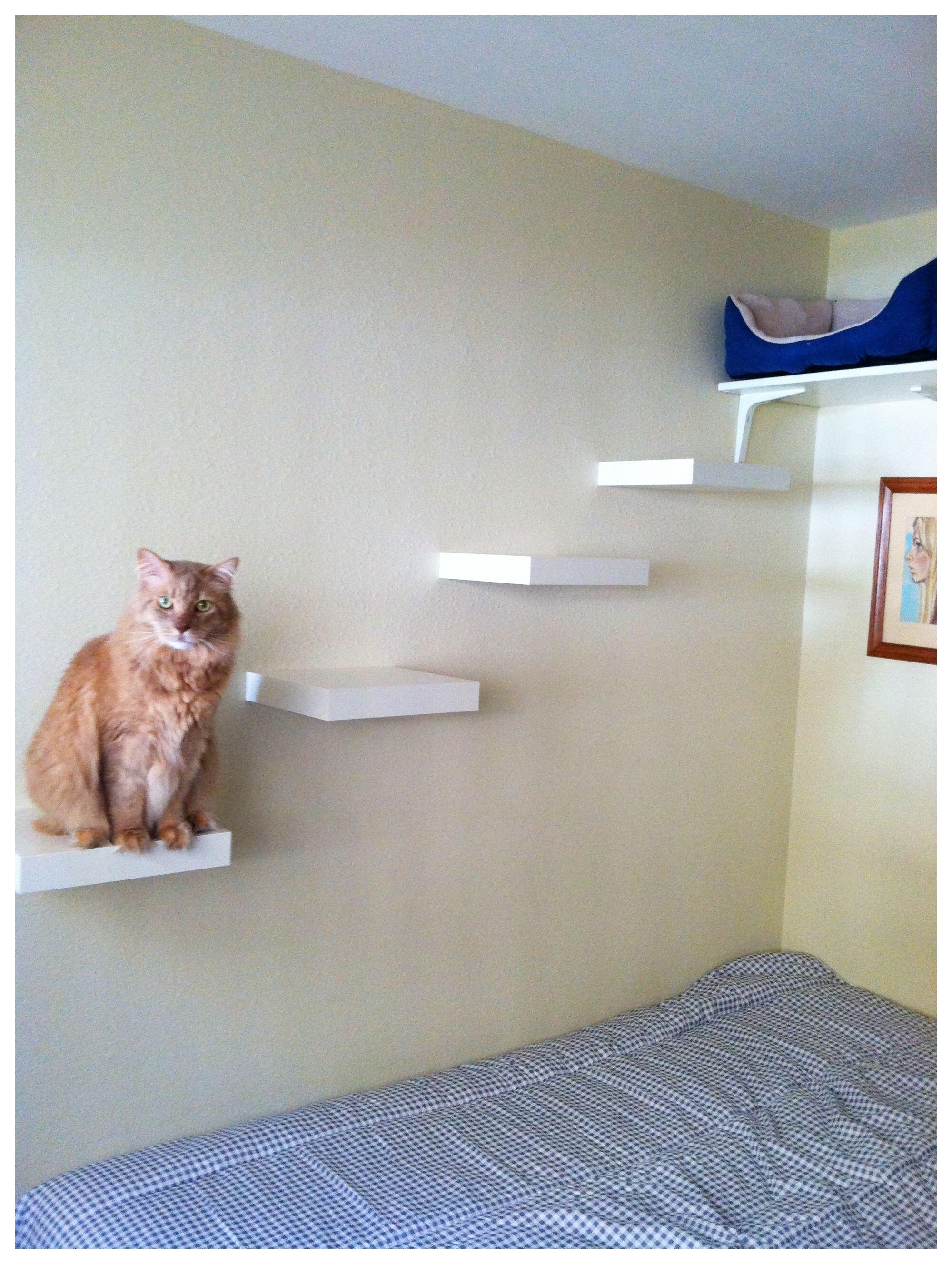 Estanterias para gatos DIY Cat shelves, Cat room, Ikea