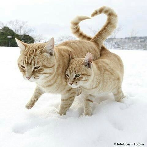 Image result for cats love heart