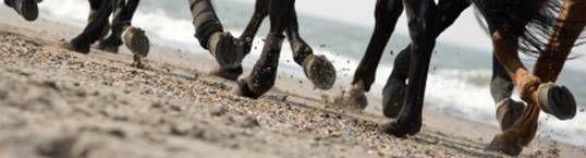 Horse riding holidays! (Someday...!)