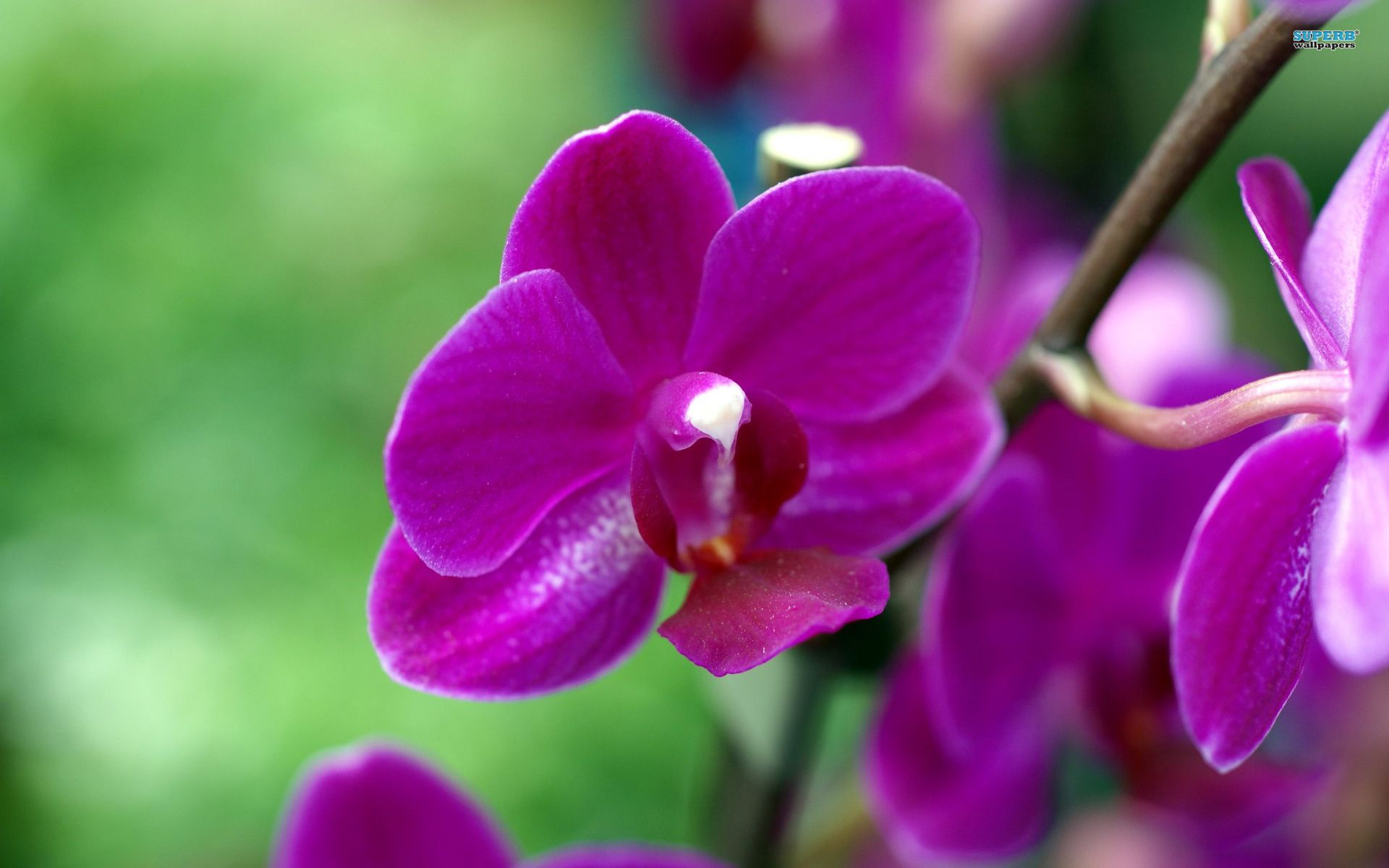 Images Of Purple Orchid Wallpaper Flower Wallpapers 4228 Wallpaper