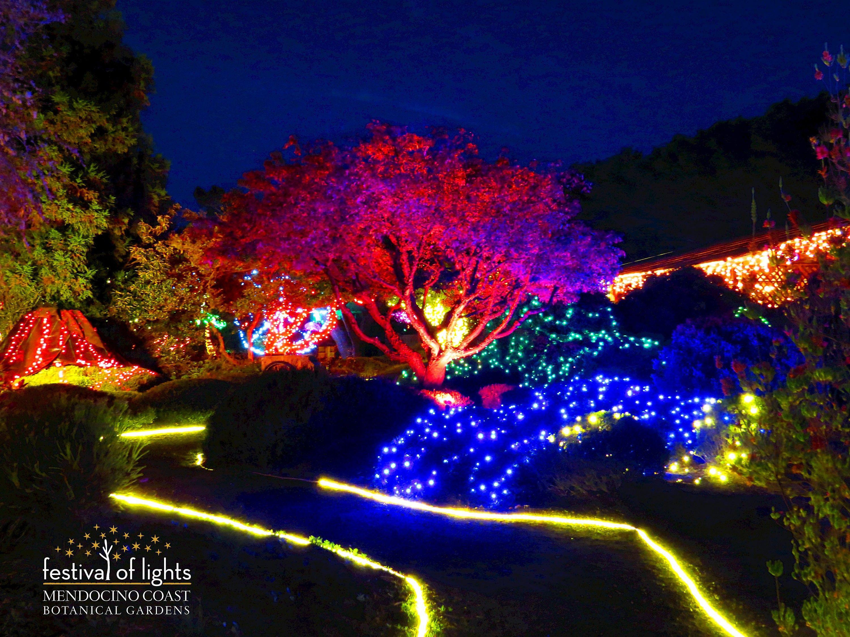 4ae9efc2057a4745b141b9be41c0cb55 - Festival Of Lights Mendocino Coast Botanical Gardens