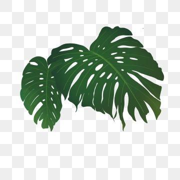 Piante Tropicali Foglie Una Singola Foglia Liberi Di