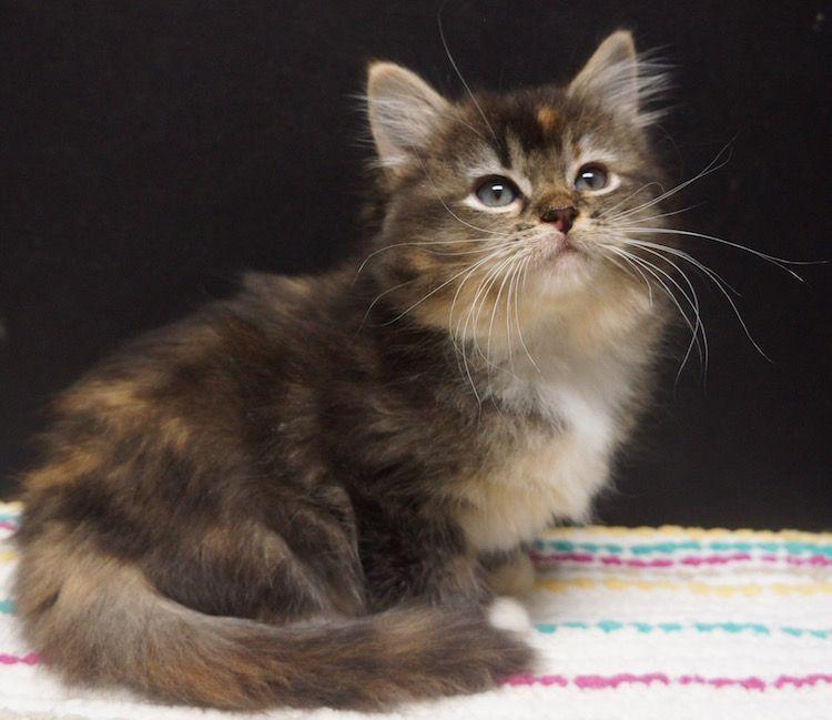 Kittens Cutest, Pretty Cats, Pets Cats