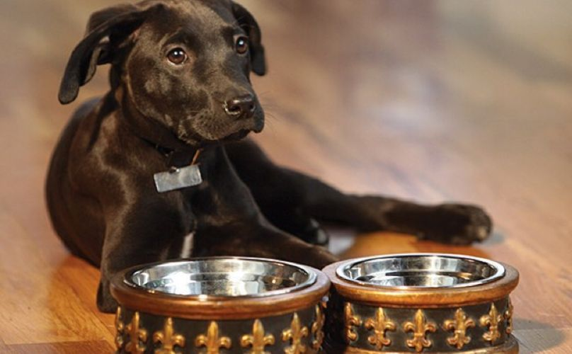 UPDATE: This Canned Dog Food Has Just Been Withdrawn From Shelves